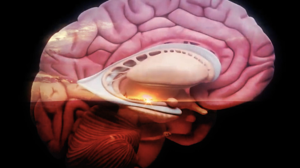 Film still from Maat means Land. A close up of a colourful conch shell like object. It has a pink, brain like rim and outer layer, with a white middle that has a glowing orange light peeking out.