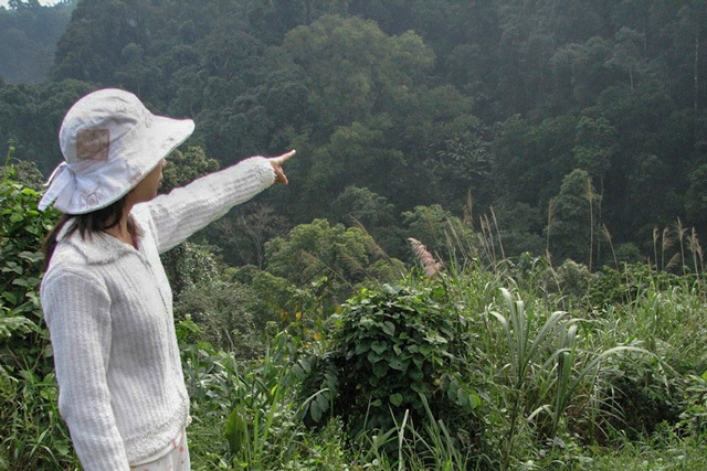 Still from Landscape Series #1. The background consists of tightly packed trees with green leaves, greenery, and bushes with varying shades of green shrubbery. On the left, a person dressed in white and wearing a white bucket hat is pointing towards the trees.