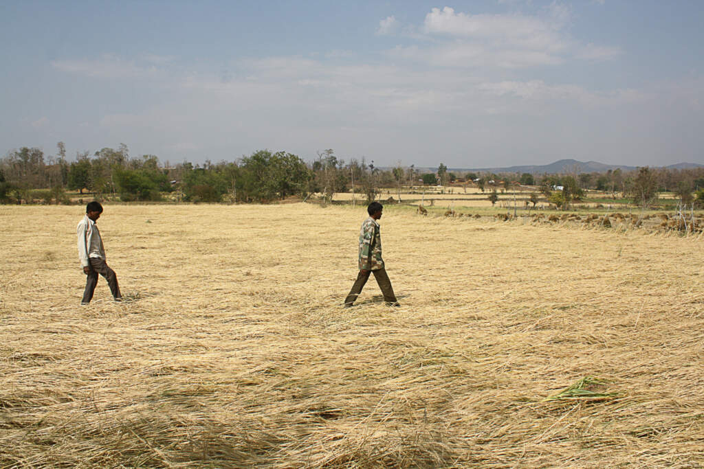 Still from Hailstorm. Wide landscape shot of a golden white wheat field, on the left hand side, a young Indian boy, and in the middle, another young Indian boy. They're walking through the field. The background is trees and a dull blue sky.